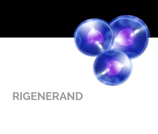 Rigenerand. Spin-off company in the field of regenerative medicine